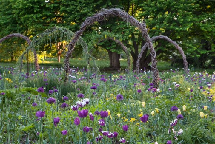 Tulipa and Allium can give an early color to the garden,planted in a natural way.